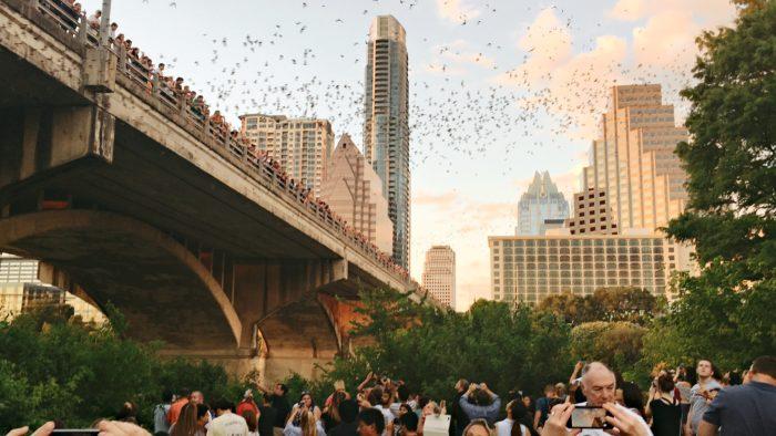 Watch 2 Million Bats Fly Over South Congress Bridge